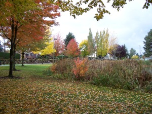 Fall in Gresham. Trees peak at different times!