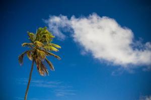 palmtree-35mm-coqueiro-large