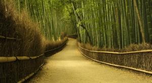 sagano-bamboo-forest-japan-sacrelegious