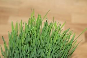 cat-grass-1524834_960_720